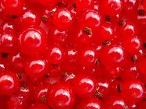 czerwone porzeczki Obrazy Royalty Free