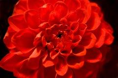 czerwone puszce Obrazy Stock