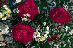 Czerwone róże i piękni biali kwiaty Bierze obrazki na wysokości zdjęcia royalty free