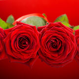czerwone róże, Zdjęcia Royalty Free