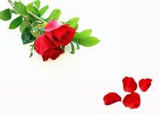 Czerwone róże i płatki Zdjęcie Stock