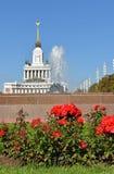Czerwone róże & x28; ostrość na flowers& x29; obrazy royalty free