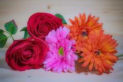 Czerwone róże, Piękny Różowy Gerbera Zdjęcie Royalty Free