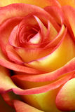 czerwone róże pojedynczy żółty Obraz Royalty Free