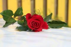 czerwone róże stół Obrazy Royalty Free