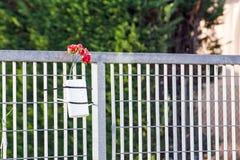 Czerwone róże upamiętniać nieboszczyka obrazy stock