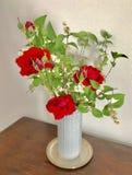 Czerwone róże w białej wazie Obrazy Royalty Free