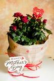 Czerwone róże w garnku na bielu stołowym i żółtym tle Doniczkowa roślina w wakacyjnym pakunku Macierzyści ` s dnia prezenty - don fotografia stock