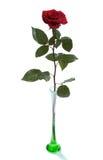 czerwone róże wyższa wazę Fotografia Royalty Free