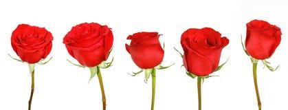 czerwone róże Zdjęcia Royalty Free