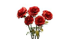 czerwone róże Obraz Stock