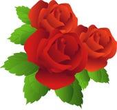 czerwone róże Royalty Ilustracja