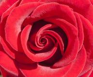 czerwone róże tapeta Zdjęcia Royalty Free