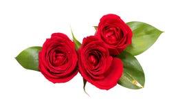 czerwone róże trzy Obrazy Royalty Free
