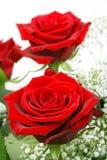 Czerwone róże w bukiecie Obraz Stock