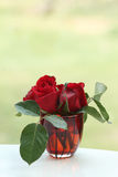 Czerwone róże w szkle Fotografia Royalty Free