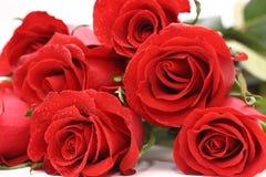 czerwone róże Obrazy Stock