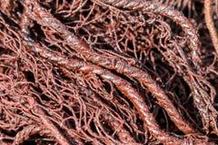 Czerwone sieci rybackie w świetle słonecznym fotografia royalty free
