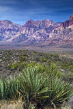 czerwone skały yucca kanion fotografia stock