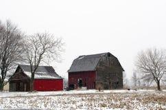 Czerwone stajnie w zimie Fotografia Stock