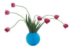 czerwone wazę tulipanu blue Obraz Royalty Free