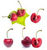 Czerwone wiśnie z liściem Zdjęcia Stock