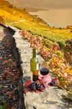 Czerwone wino i winogrona. Tarasowi winnicy w Lavaux. Fotografia Royalty Free
