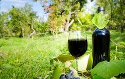 Czerwone wino w ogródzie Fotografia Royalty Free