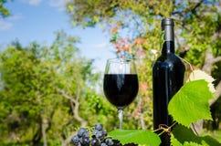 Czerwone wino w ogródzie Zdjęcia Royalty Free
