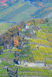 Czerwone Wino Wycieczkuje ślad, Ahr, Palatinate, Niemcy Fotografia Royalty Free