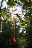 czerwone wstążki fotografia stock