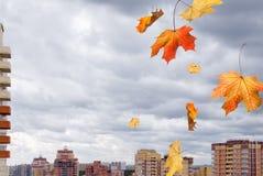 Czerwonego żółtego klonu spada liście nad budynkami na chmurzącym b Obrazy Royalty Free