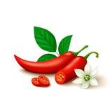 Czerwonego chili pieprz odizolowywający na białym tle Obrazy Stock