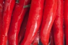 Czerwonego Chili pieprze na wodzie Obraz Royalty Free