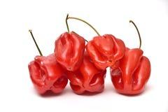 Czerwonego habanero dzwonkowi pieprze odizolowywający na białym tle zdjęcia royalty free