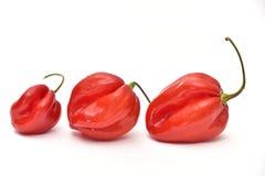 Czerwonego habanero dzwonkowi pieprze odizolowywający na białym tle zdjęcie royalty free
