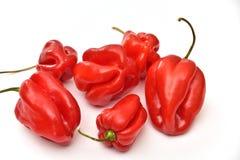 Czerwonego habanero dzwonkowi pieprze odizolowywający na białym tle zdjęcie stock