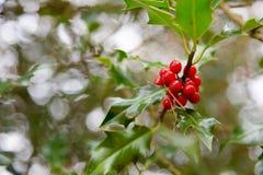 Czerwonego jagodowego osetu wierzchołka lub emaila chodnikowa realistyczni powitania Fotografia Royalty Free