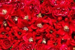 Czerwonego koloru kwiaty Zdjęcie Stock