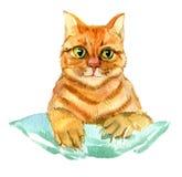 Czerwonego kota akwareli odosobniona ilustracja Obraz Royalty Free
