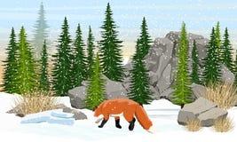 Czerwonego lisa odprowadzenie na łące Świerkowy las, kamienie i góry, sucha trawa ilustracji
