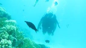 Czerwonego morza pikowanie Obrazy Stock