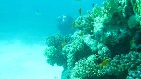 Czerwonego morza pikowanie Zdjęcie Stock