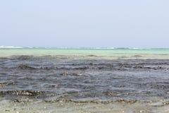 Czerwonego morza plaży Czerwony morze Egipt Zdjęcie Royalty Free