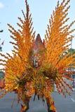 Czerwonego ogienia ptak dwa Fotografia Royalty Free