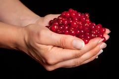 Czerwonego rodzynku jagody trzyma w rękach obrazy royalty free