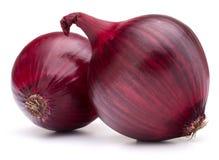 Czerwonej cebuli żarówka Zdjęcie Stock