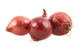 Czerwonej cebuli compositon odizolowywający Fotografia Royalty Free