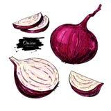Czerwonej cebuli ręka rysująca wektorowa ilustracja Warzywo Odizolowywający przedmiot Obraz Royalty Free