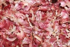 Czerwonej cebuli łupa fotografia stock